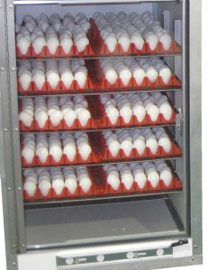 Incubator for Chicken